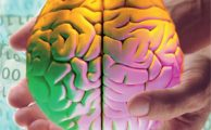 Что представляет собой разум?